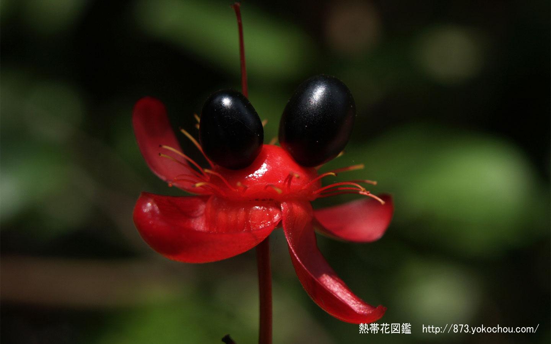 ミッキーマウスの画像 p1_36
